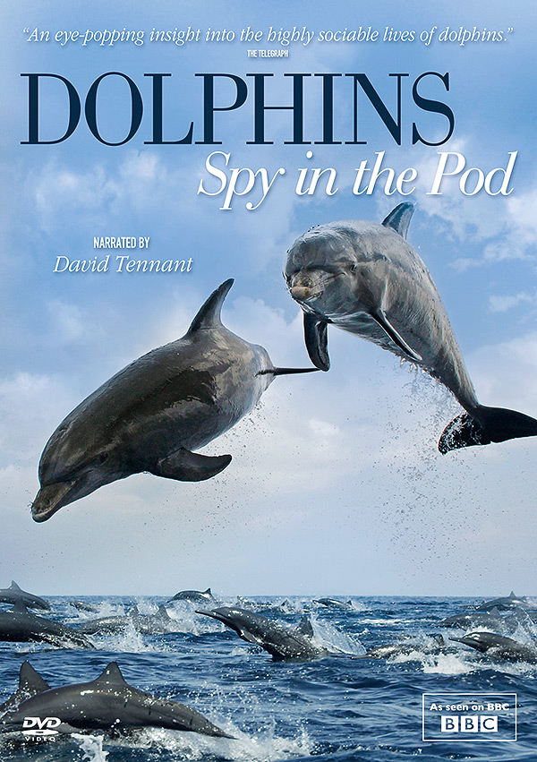 dolphins_dvd_600