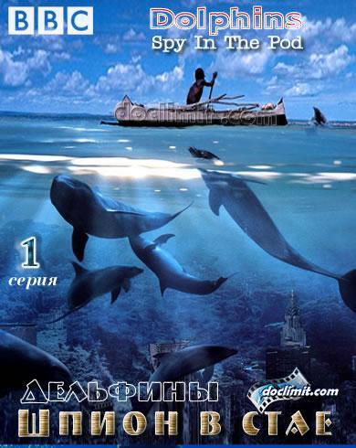 delfiny-shpion-v-stae-1-seriya_469