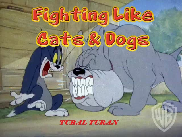 fighting-cats-dogs.jpg